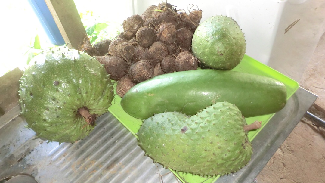 Soursop, tiquisque, and papaya harvest