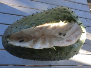 Soursop fresh from our tree