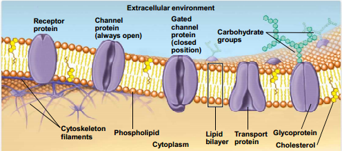 the different biological formations of proteins