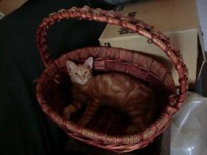 crikey-in-basket