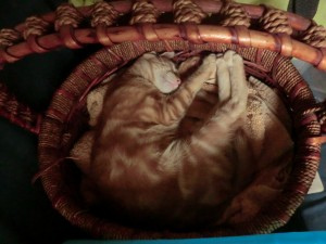 Crikey Curled Up in Basket